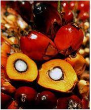 Водорастворимое масло пальмы