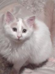 котенок 4 месяца, мальчик
