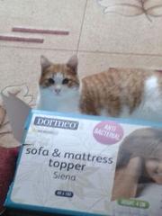 красивые котята 5 месяцев,  мальчики